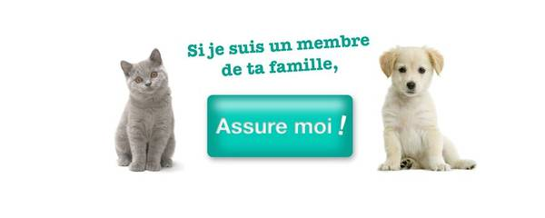 Assurance animaux gmf - authentique